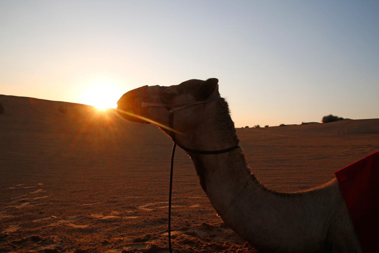 砂漠に泊まる!「砂漠エリア」