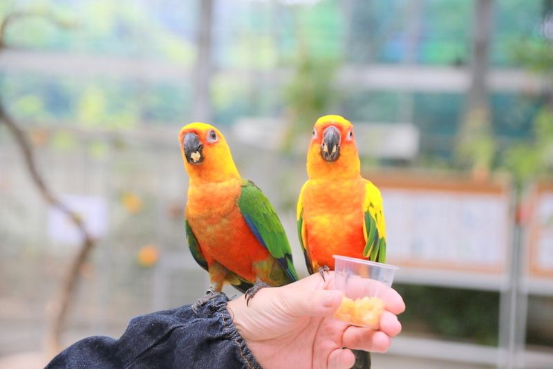 2日目11:40頃:「掛川花鳥園」