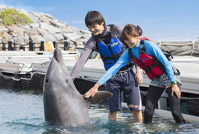 イルカと触れ合える「ルネッサンス リゾート オキナワ」