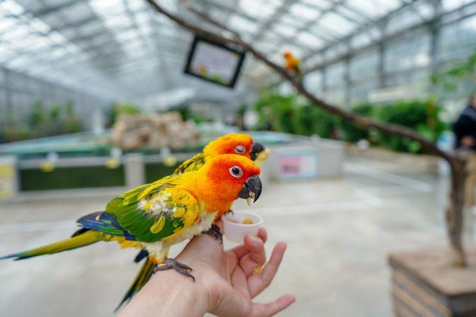 1日目午前:さまざまな鳥と触れ合える「掛川花鳥園」