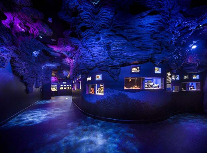 2日目午後:沼津港深海水族館 シーラカンス・ミュージアムで深海の神秘に触れる