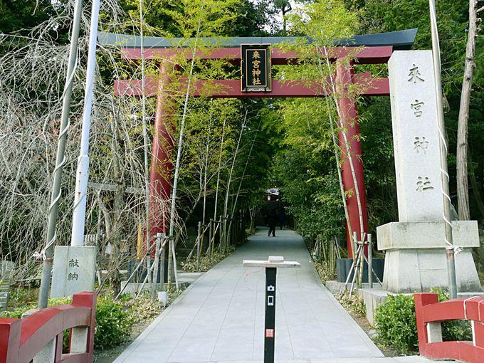 1日目午後:來宮神社