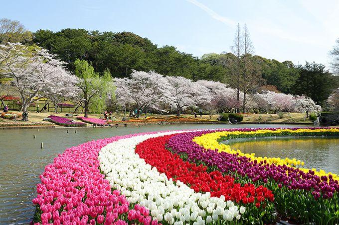 2日目午前:四季折々の花が咲き誇る絶景スポット「はままつフラワーパーク」