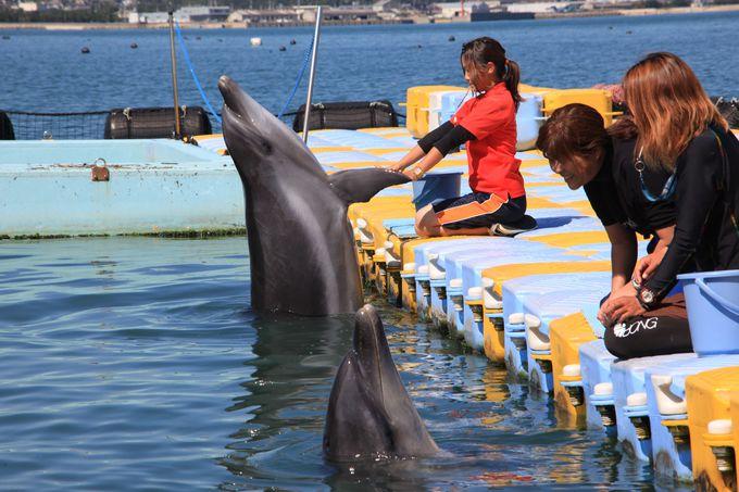イルカ好きは香川に集まれ!「日本ドルフィンセンター」