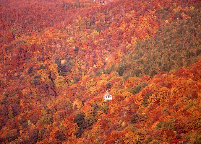 秋の蔵王、紅葉絶景を車からロープウェイから楽しむ!