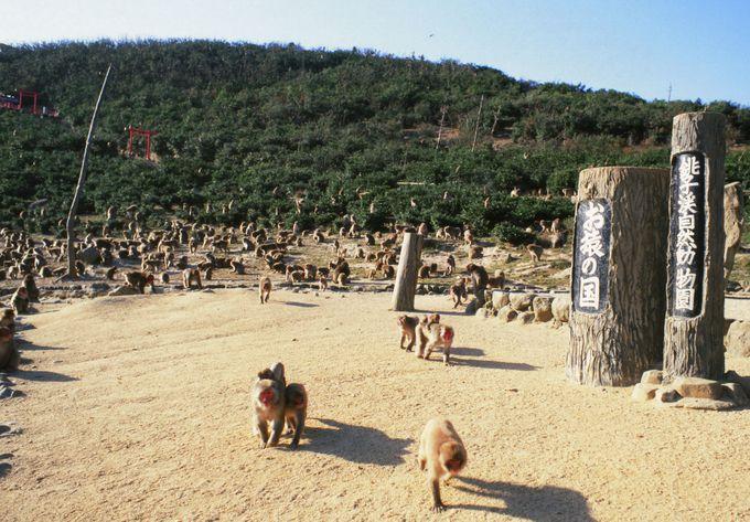 500匹の野生サルが圧巻「銚子渓自然動物園 お猿の国」