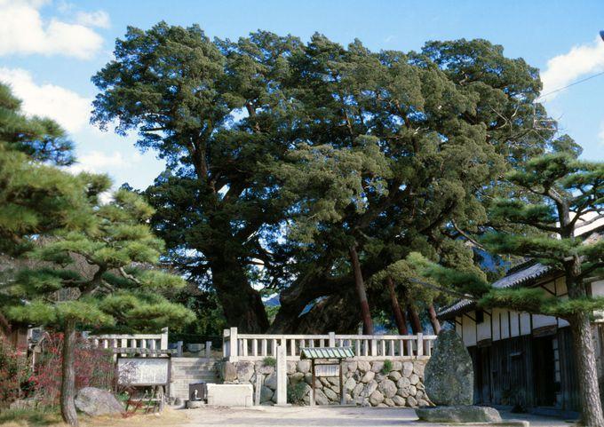 日本最大のシンパクを見に行こう「宝生院」