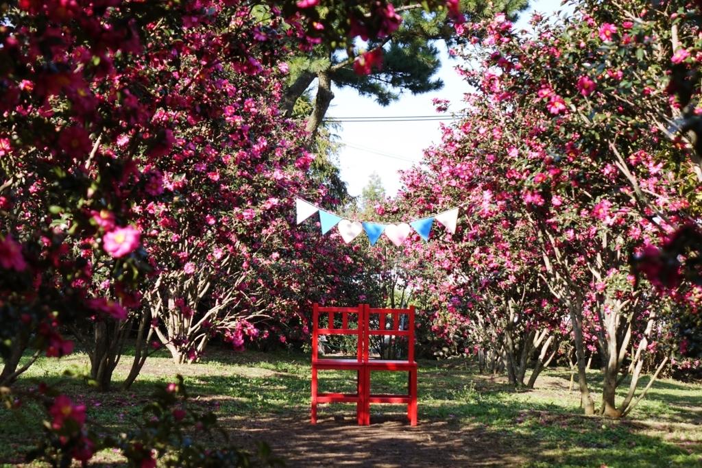 4.冬だけに出会える赤やピンクの世界「椿園」