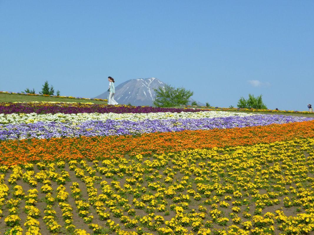 2日目午後:日本最大級の「とっとり花回廊」で優雅に散策(南部町)