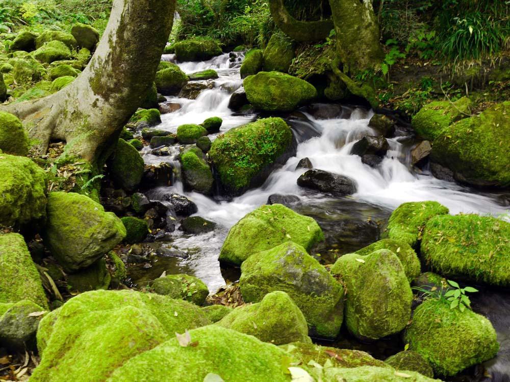2日目朝:木谷沢(きたにざわ)渓流でリフレッシュ(江府町)