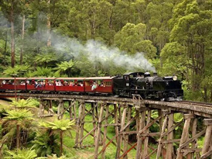 4.蒸気機関車パッフィンビリー&ダンデノン半日観光ツアー