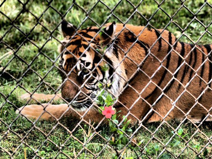 遊具もあって楽しい!ホノルル動物園
