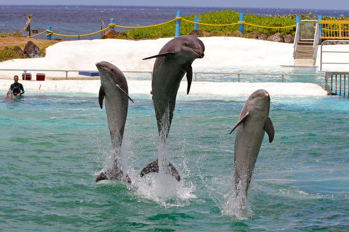 イルカと泳げる!シーライフ・パーク