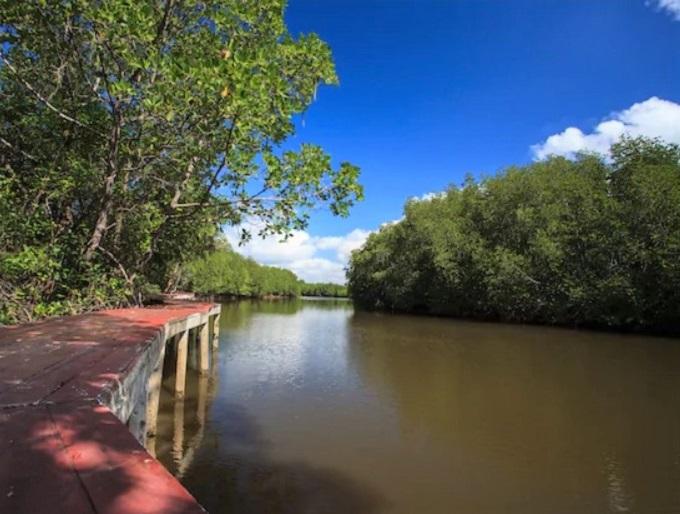 7.カンザー国立公園&マングローブ林観光ツアー