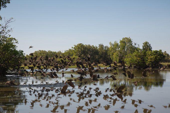 【カカドゥ国立公園】貴重な自然・文化の宝庫