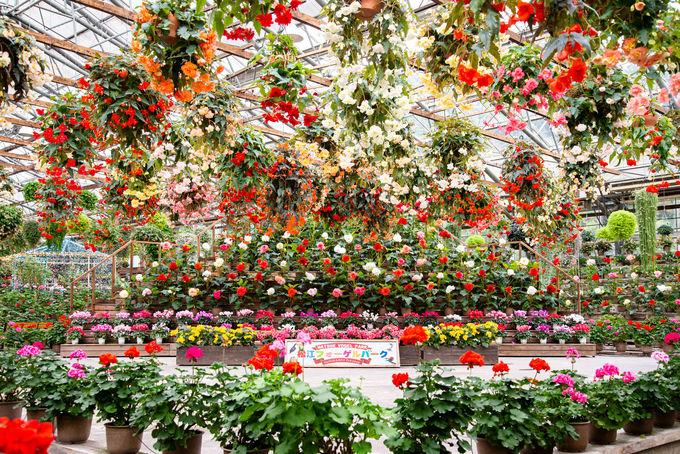 2日目午後:インスタスポットがたくさん!花と鳥の楽園「松江フォーゲルパーク」