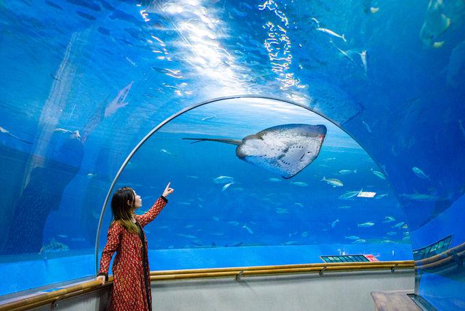 1日目午後:「幸せのバブルリング®」が見れたらラッキー!「しまね海洋館アクアス」のシロイルカ