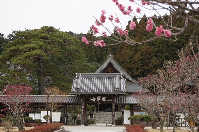 3日目午前:「瑠璃光寺」の優美な国宝五重塔に惚れ惚れ