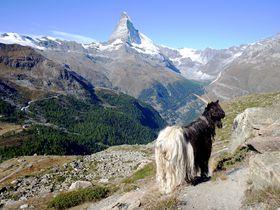 多彩な魅力溢れるスイスで女子旅!絶景スポット・アート・極上グルメを思いっきり楽しむ
