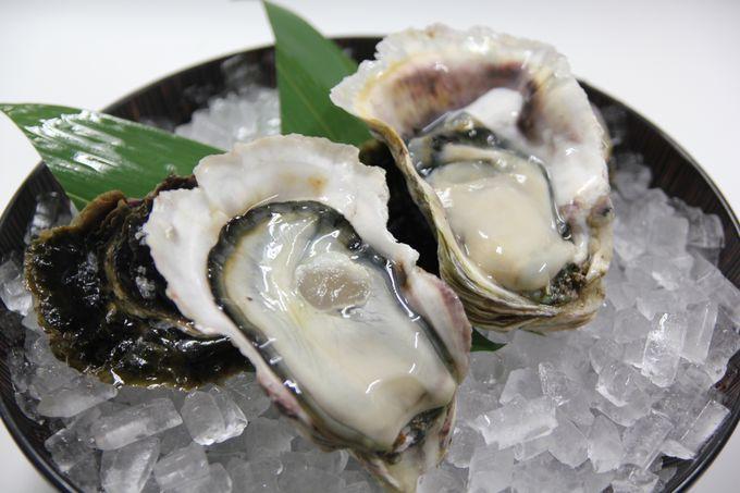 カキフライでもお鍋でも!広島の牡蠣を現地から直送しよう