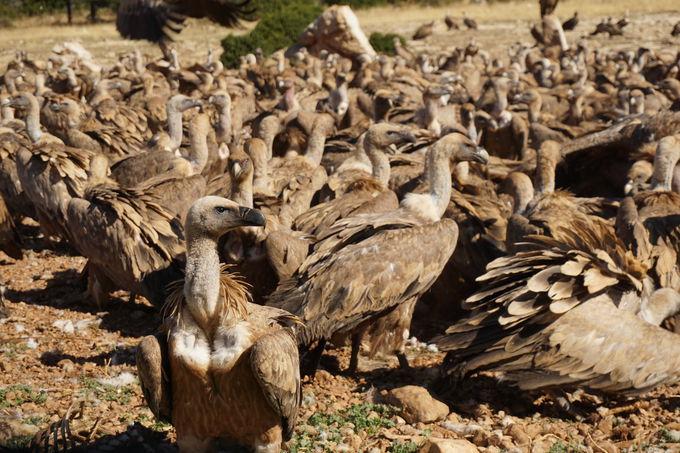 レリダ:野生動物とふれあえるボウモルト自然保護区