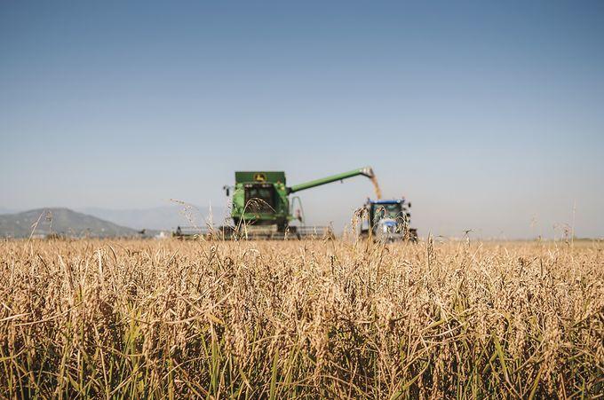 タラゴナ:スペインの米どころ!デルタ・デル・エブロ