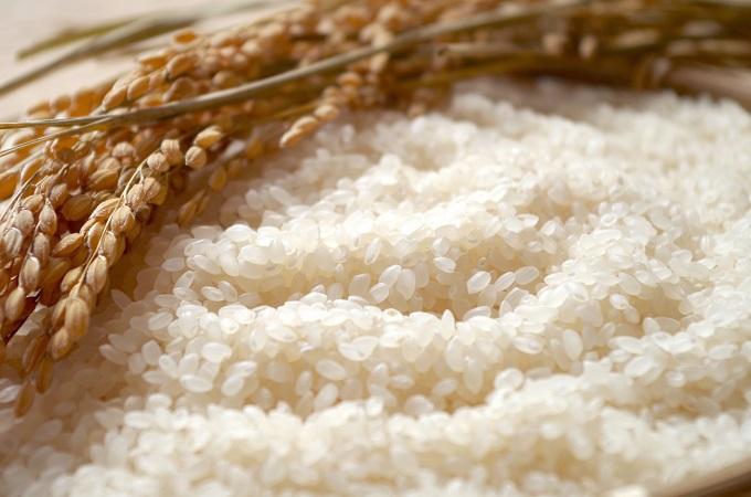 石川のお米をたっぷり味わおう