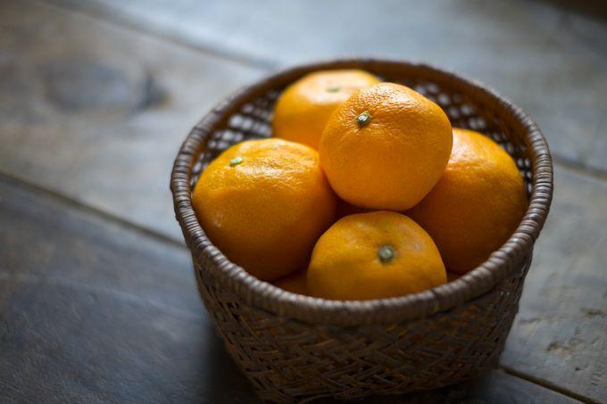 旬のフルーツを味わおう