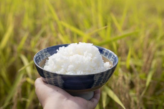 島根のお米&麺料理を取り寄せて旅気分!