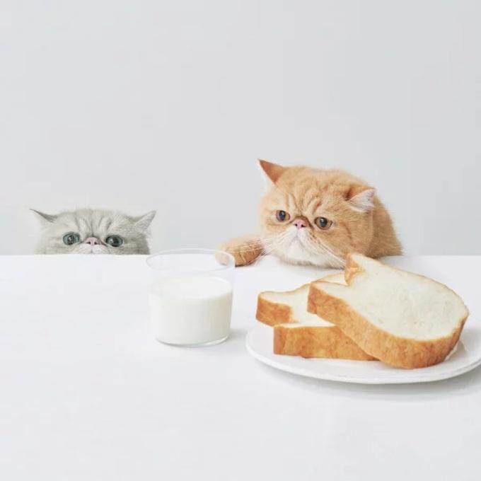 人間が楽しむ猫グルメ・グッズも