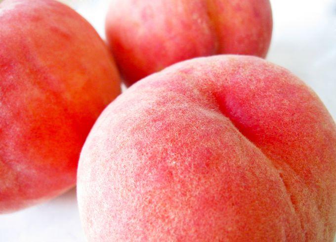岡山はフルーツ王国!新鮮な果物をふるさと納税でゲット
