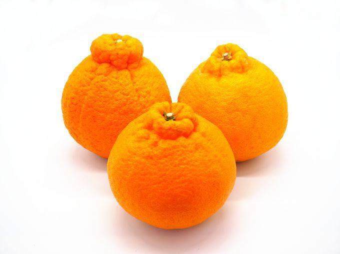 愛媛の柑橘類をふるさと納税でお取り寄せ!