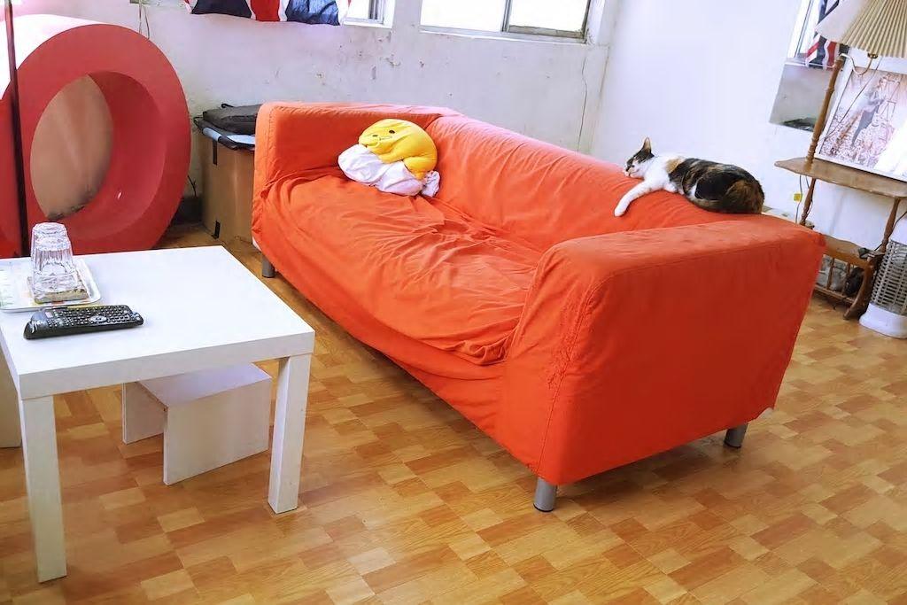 お部屋に猫が!猫ちゃん好きにおすすめなのだニャァ/台北市