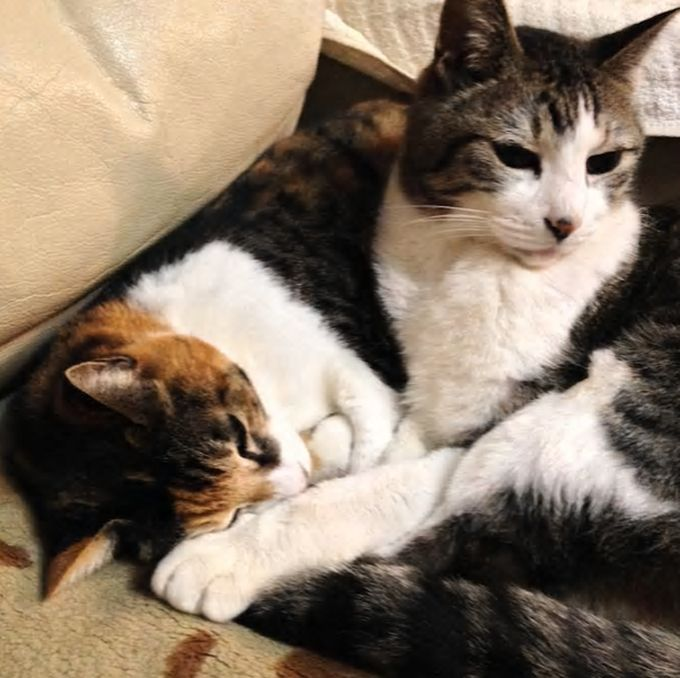 4.人懐っこい猫が2匹、世田谷区の閑静な住宅街/東京都