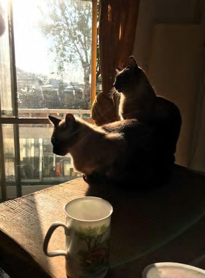12.日当たりの良いお部屋に可愛い猫ちゃんが2匹/芦屋市