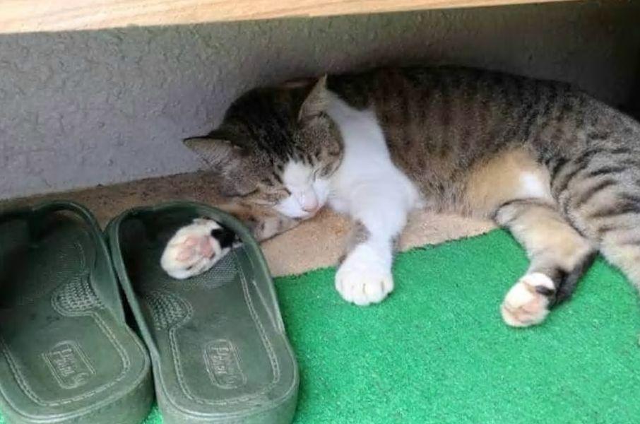 17.沖縄の綺麗な景色と猫ちゃんに癒やされる/石垣市
