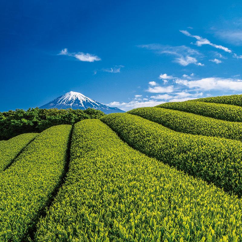 今年行きたい静岡!その〇〇な理由とは?