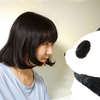 Sige panda